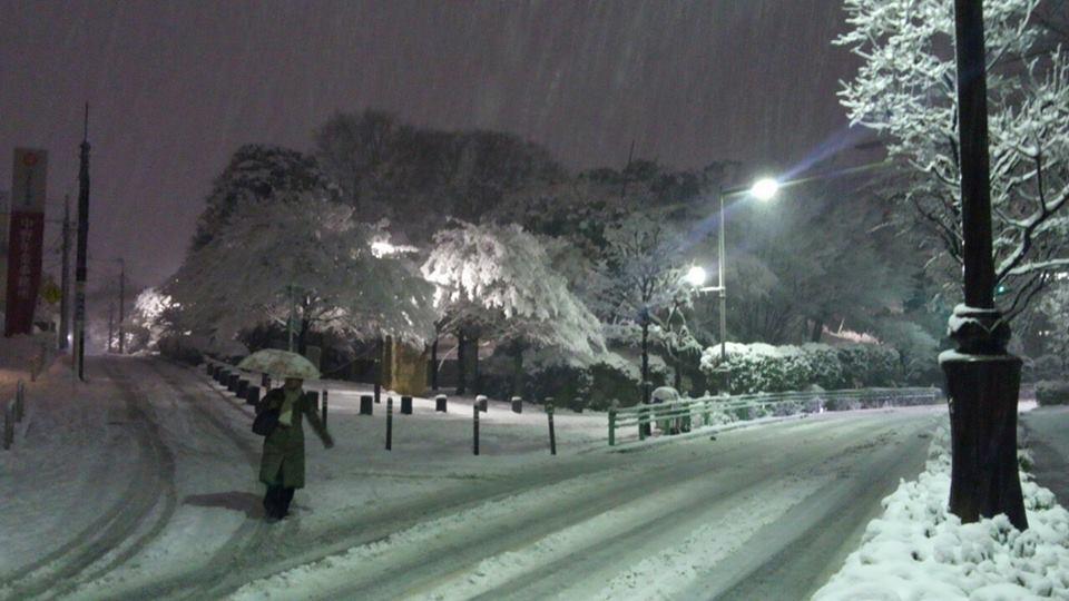 ある雪の日。