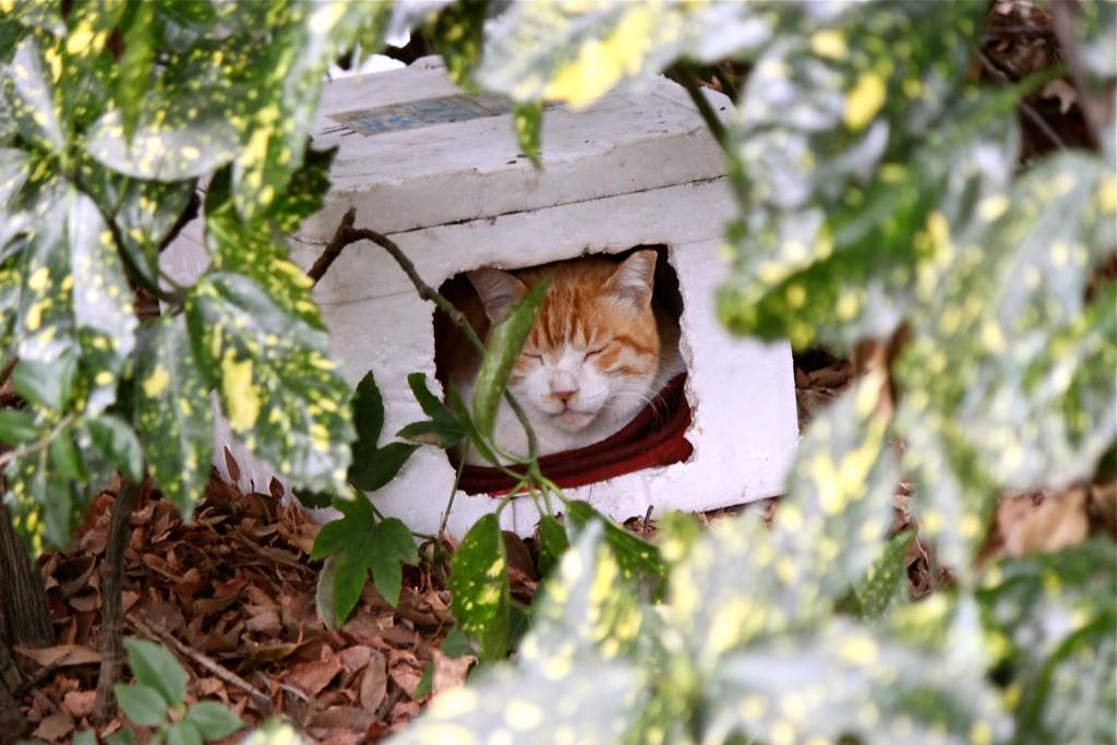 箱入りネコ