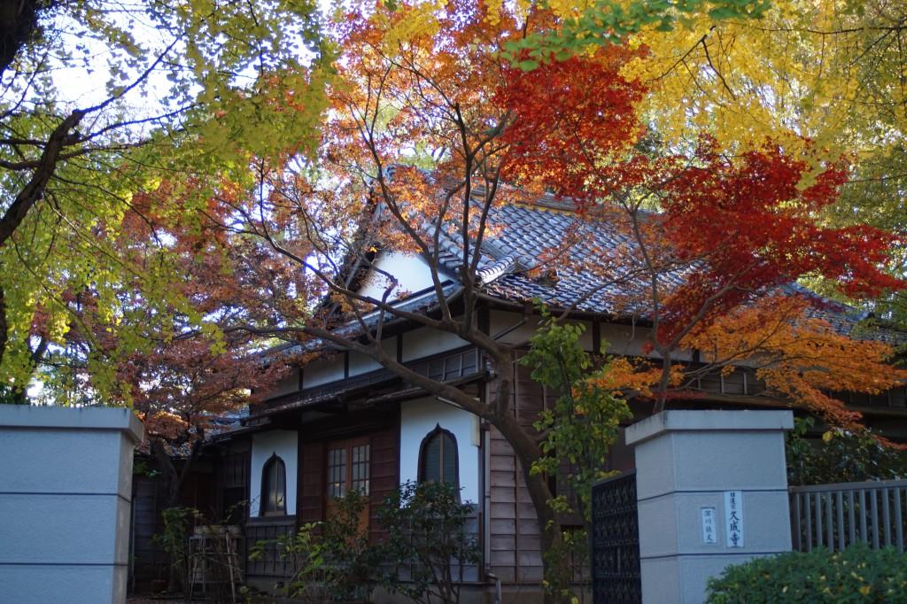 色とりどりな紅葉