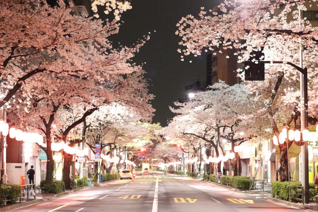 中野桜通り深夜の幻想